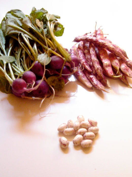 Purple radishes & pink shelling beans
